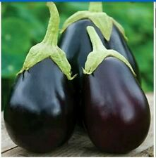 Vegetable Seeds Brinjal F1 Hybrid Seed | 100 seeds approx(buy 1 & get 1 free)