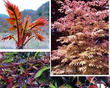 Gemüsebaum Samen exotische Blühbäume Pflanzen für das Frühjahr den Garten Balkon