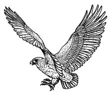 "Clear stamp (2.5""x3"") Hawk in Flight FLONZ vintage unmounted acrylic"