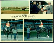 RUFFIAN - 1975 COMELY STAKES HORSE RACING PHOTO COLLAGE!