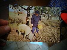 En Périgord  Cochon cercheur de Truffe Editions René Marsacsur l'Isle