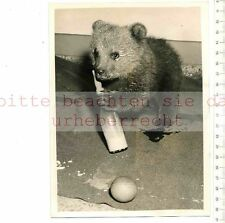 ORIGINAL PRESSEFOTO:1956 RUSSION BABY BEAR PRESENT for PRINCESS ANNE by KRUSCHEV