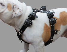 """6 Lbs Real Leather Weighted Pulling Dog Harness Exercise Training  28""""-35"""" Chest"""