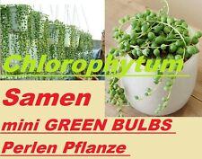 15x Chlorophytum Samen mini GREEN BULBS Blumen Samen Pflanze selten RaR A1 #232