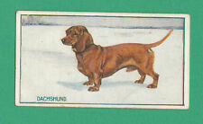 DOGS  -  R. & J. HILL  -  VERY RARE DOG CARD - DACHSHUND (SPINET TOBACCO) - 1914