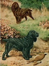 FIELD SPANIEL CHARMING DOG GREETINGS NOTE CARD TWO BEAUTIFUL DOGS