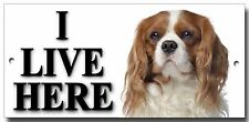"""CAVALIER KING CHARLES """"I LIVE HERE"""" METAL SIGN,PREMIUM QUALITY SIGN."""