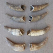 "4 pair RAW NATURAL 5"" to 8"" LONG BLACK POWDER STEER HORN,BULL,SKULL,COW horns"