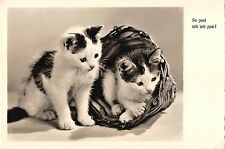 B98523 real photo cat chat germany animals animaux