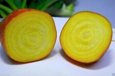 Organic Beet, Golden Detroit 300+ Seeds-Heirloom,Excellent choice for pickling !