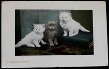 "OLD POSTCARD OF CATS/ KITTENS "" A PROMISING FAMILY"" USED 1910"