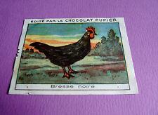 LES POULES BRESSE NOIRE CHROMO CHOCOLAT PUPIER JOLIES IMAGES 1930
