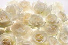 Blanc fleurs roses non Tissé papier peint mural mur 2.48x3.68 m HQ