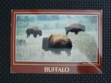 Bison bisonte europeo Buffalo VECCHIA CARTOLINA/Old Picture Postcard c2367