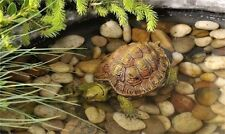 TURTLE  POND FLOATER FOUNTAINS garden pool figurine yard decoration floats