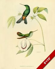 HUMMING BIRDS PERCHED ON WHITE FLOWER PAINTING BIRD AVIAN ART REAL CANVAS PRINT