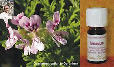GERANIUM - Pelargonium graveolens - Ägypten 5ml 100% naturreines ätherisches Öl