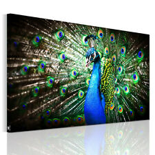 Canvas Prints Decor Wall Art Painting Picture-Blue Peacock In Its Pride Unframed