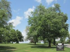 CEMETARY TWO BURIAL PLOTS Phila. Memorial Park Frazer PA Valued at $5990. 12-15