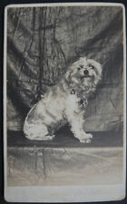Photo Cdv Albuminé Chien Dog Animal Vers 1880