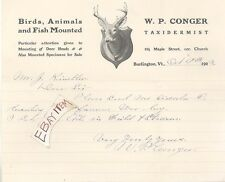 1903 Burlington Vermont W. P. CONGER taxidermy TAXIDERMIST deer head LETTER