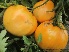 10+ JAFFA  SIBIRISCHE ORANGE Fleischtomate fruchtig süß ertragreich Tomatensamen