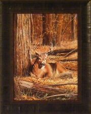 BEDDING DOWN by Kevin Daniel Deer Buck Wildlife 17x21 FRAMED PRINT PICTURE