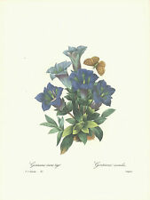 REDOUTE Botanical BUTTERFLY Flower GENTIANA Print #45