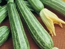 25 COCOZELLE ZUCCHINI SQUASH 2017 (all non-gmo heirloom vegetable seeds!)