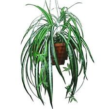 52cm Artificial Variegated Spider Plant with 68 Leaves - Pot not included