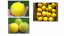 30 VINE PEACH SEEDS RARE VEGETABLE FRUIT DELICIOUS/A JOY TO GROW & EAT TOO