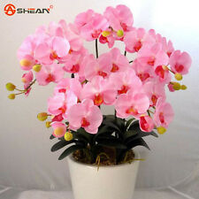 100 Pink Phalaenopsis Orchid Seeds Flower Seeds Indoor Bonsai Orchids