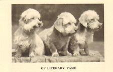 """* Dandie Dinmont Terrier """"P"""" -1931 Vintage Dog Art Print"""