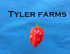25+ Red Savina Habanero Pepper Seeds (chili, chile) Hotter than scotch bonnet