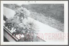 Unusual Vintage Photo Dahlia Flowers in Window 702509