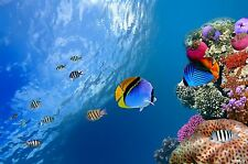 A1 BEAUTIFUL UNDERWATER CORAL REEF WITH FISH PHOTO PICTURE ART PRINT POSTER