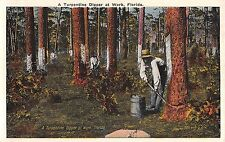 c.1920 Dipper at Work Turpentine Industry FL post card