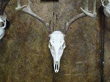 Deer Skull HANGER, Deer Skull Bracket, Skull Mount Hanger plaque, *Hanger Only*