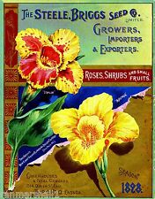 1898 Steele Roses Vintage Flowers Seed Packet Catalogue Advertisement Poster