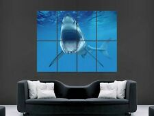 GREAT WHITE SHARK SHOWING TEETH  HUGE LARGE WALL ART POSTER PICTURE