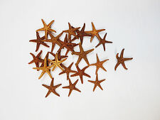 "12 Small Brown Starfish 3/4""- 1""  Beach Cottage Decor Shells Seashell Craft"