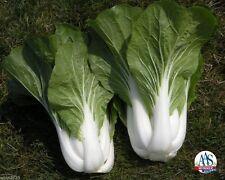 Chinese Cabbage (1000 Seeds) White Pak Choi,Non-Heading Leaf  Vegetable.,Organic