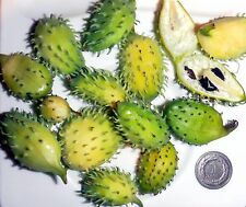 Small Achocha, Achocchilla - Cyclanthera achocchilla - rare vegetable - 7 seeds