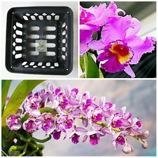 "BEST Vanda Orchid Net Pot Basket Cup 6"" Square Hanging Phalaenopsis Paphiopedil"
