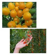 der Samtpfirsich und die Goji-Beere - zwei tolle Obstsorten im Samen-Spar-Set !