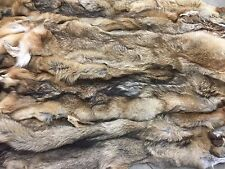 Professionally Tanned Coyote Pelts, Fur, Hide - Grade 3 - Minnesota Brand