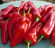 0.1g (approt.15) giant sweet pepper seeds KOMTESA H fruits could grow up to 110g