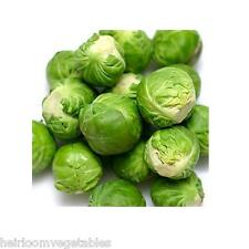 LONG ISLAND BRUSSEL SPROUTS 1,000 SEEDS.  ***SAME DAY SHIPPING***