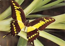 BR44096 butterflay insects papilon animaux animals