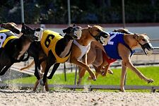 How To Win BIG MONEY At The Greyhound Races - Advanced Course - NOW ON DVD!!!!
